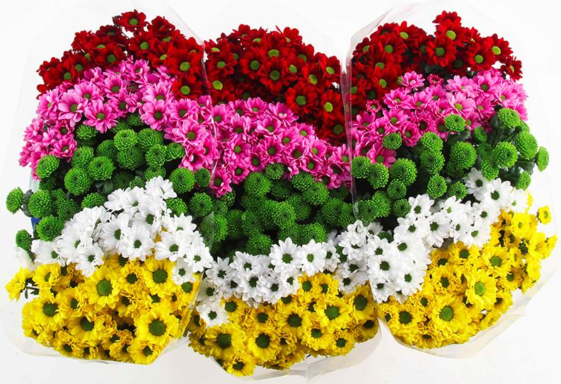 Купить букет хризантем в СПб.