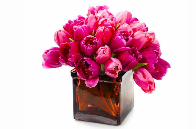 Фото тюльпанов. Купить цветы в СПб.
