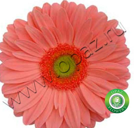 № G-1505 Aqua pink