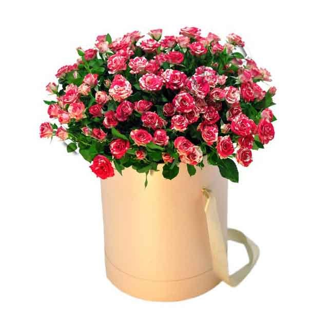 Ш-006 Кустовая роза 25шт в шляпной коробке.
