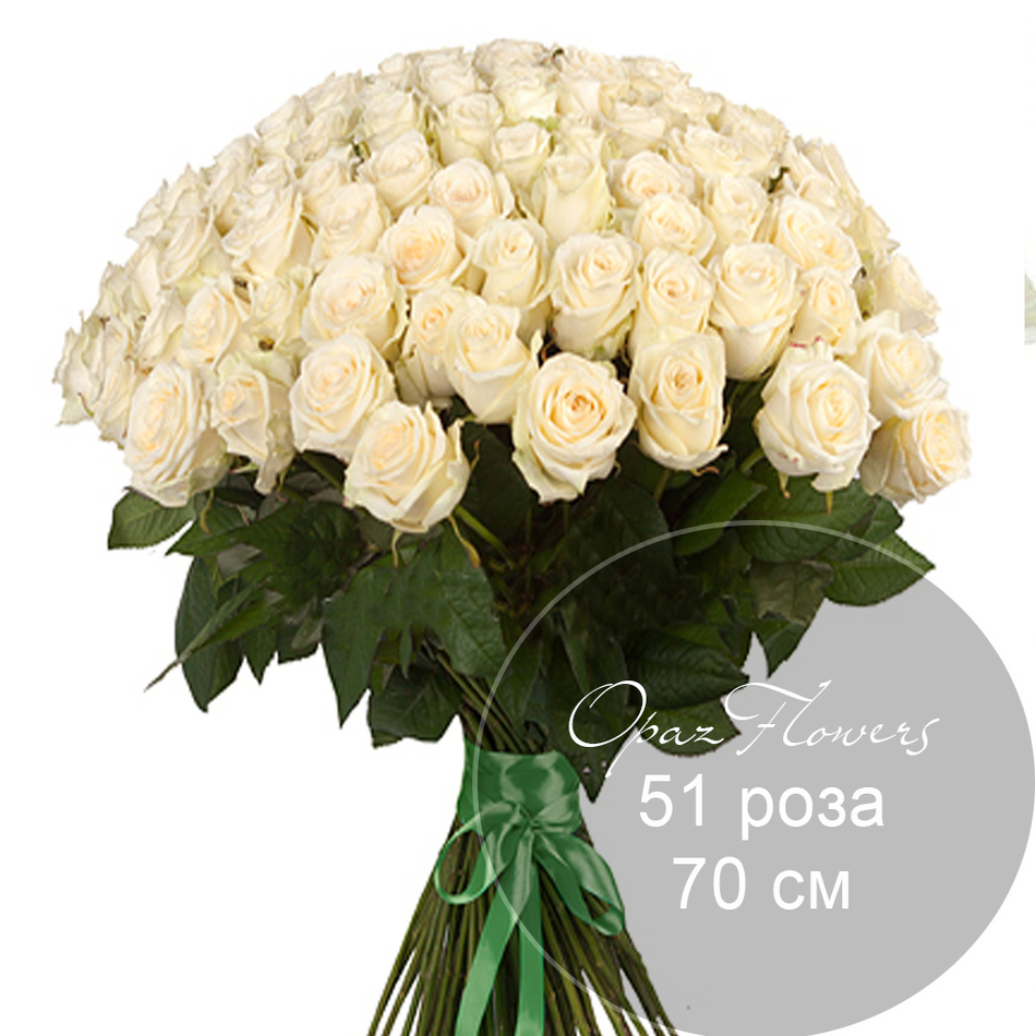 51 белая роза 70 см под ленту