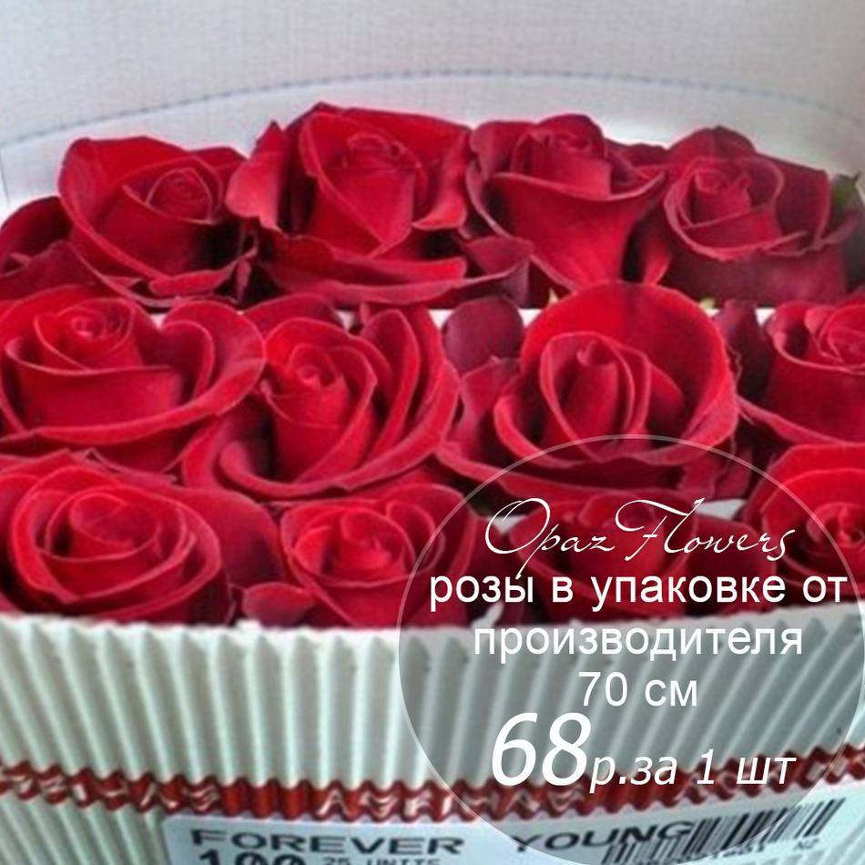Розы в пачке от производителя   высота 70 см  ар.RO-013