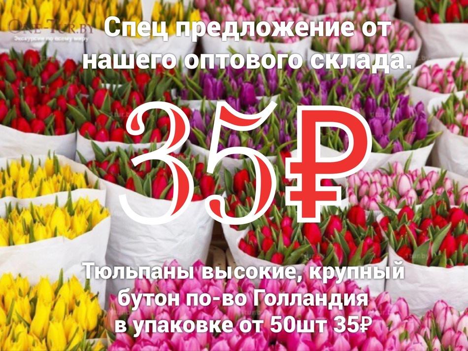 ТЮЛЬПАНЫ ОПТОМ ОТ 50 ШТ.