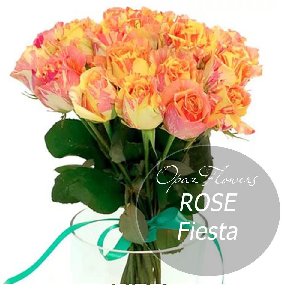 № RS-1409 на фото 25 розово-желтых роз