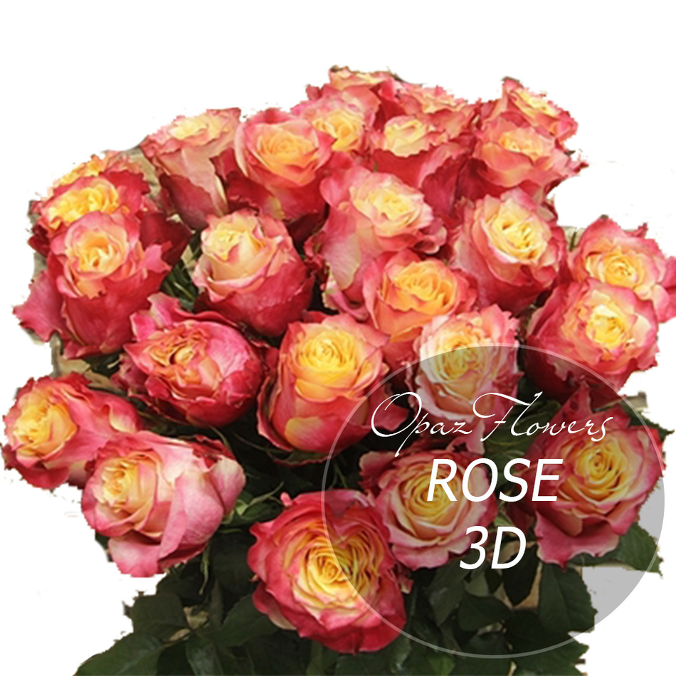 NRS-1413 на фото 25 красно-желтых роз