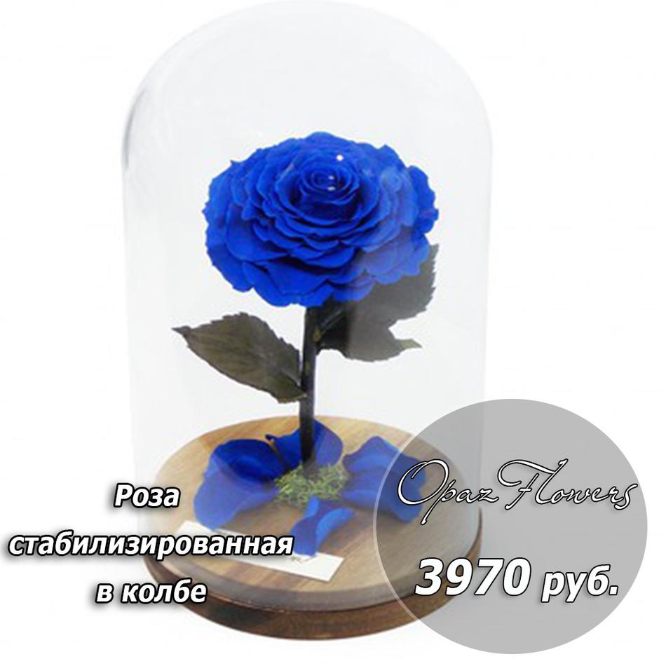 стабилизированная синят роза
