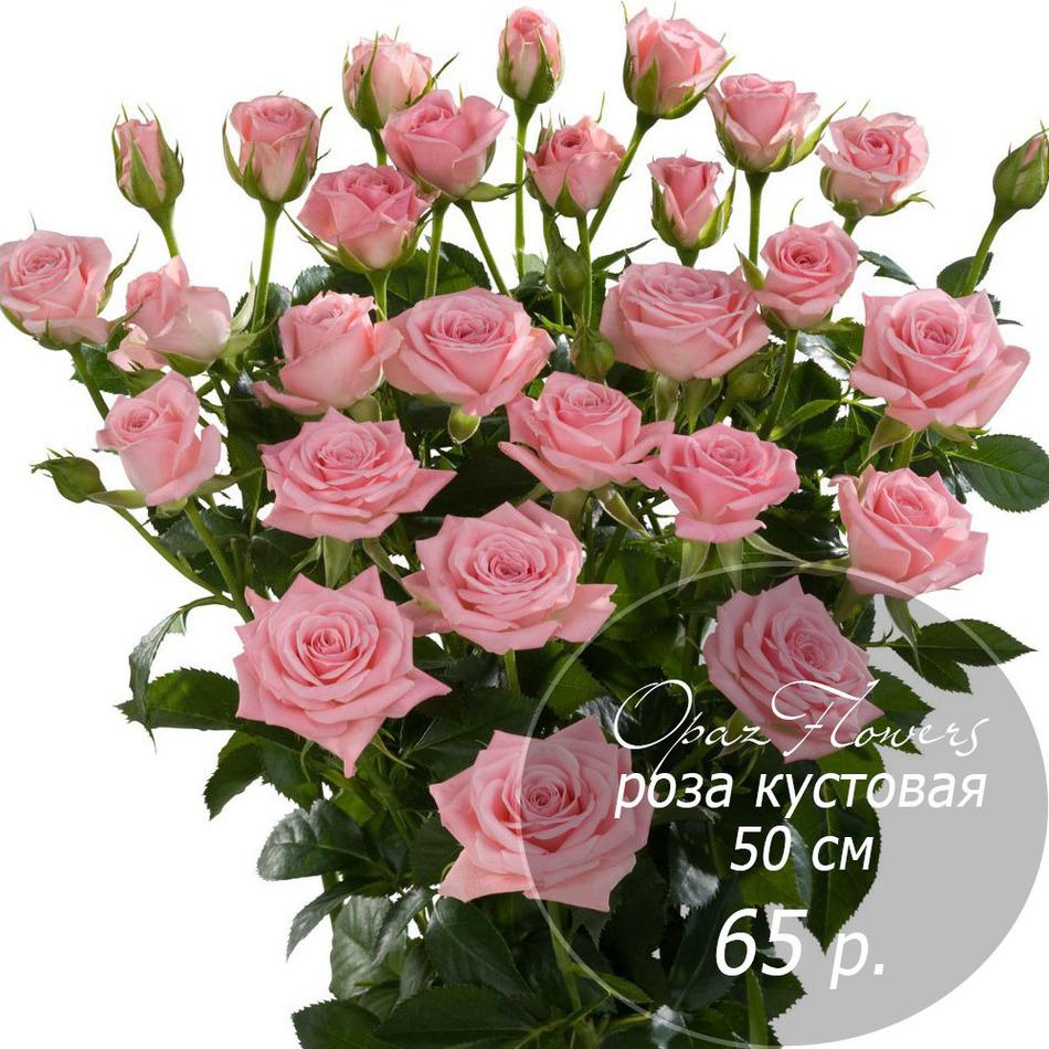 RK-31 кустовая роза 50 см