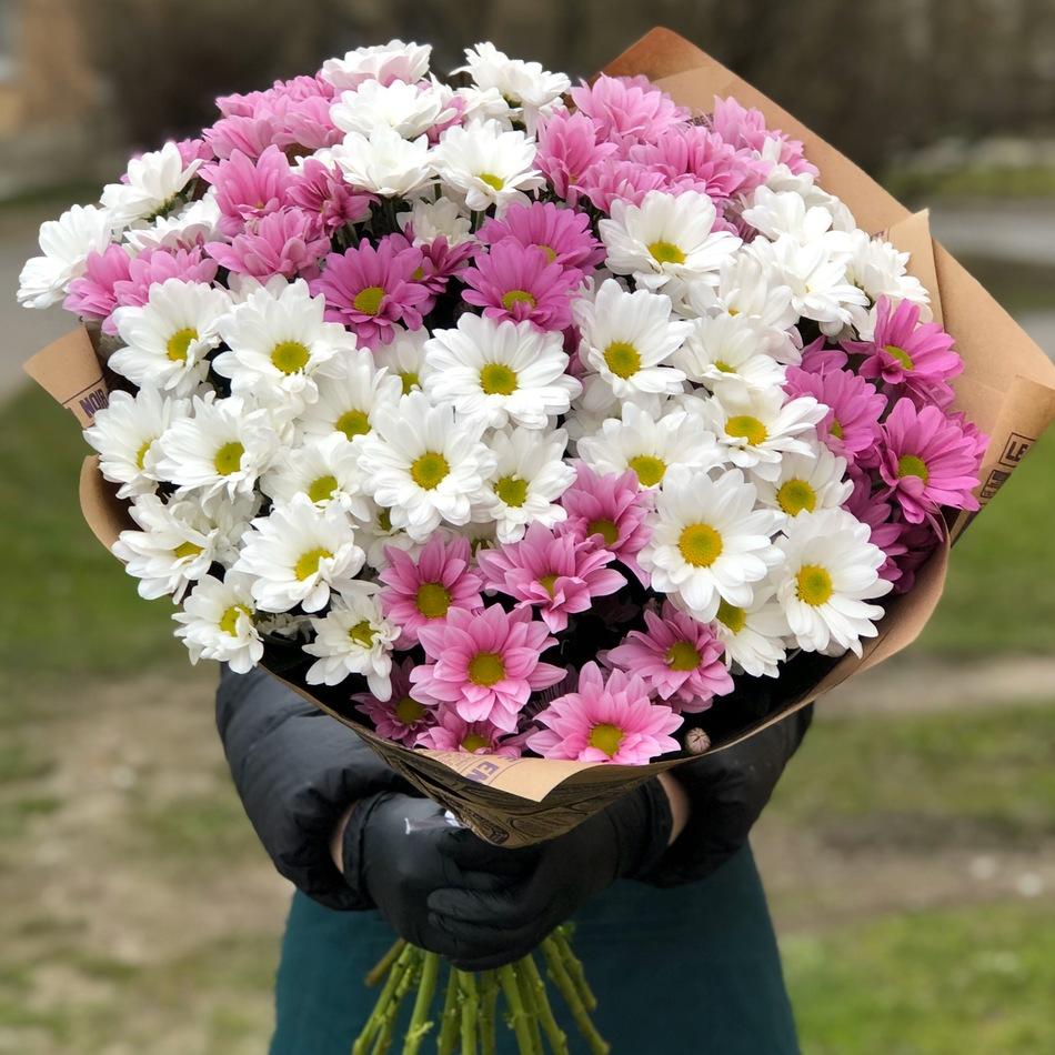 Букет хризантема кустовая 15шт  № АН-016