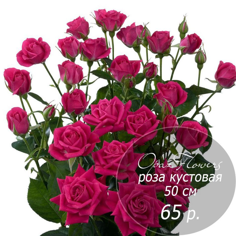 RK-25  кустовая роза 50 см