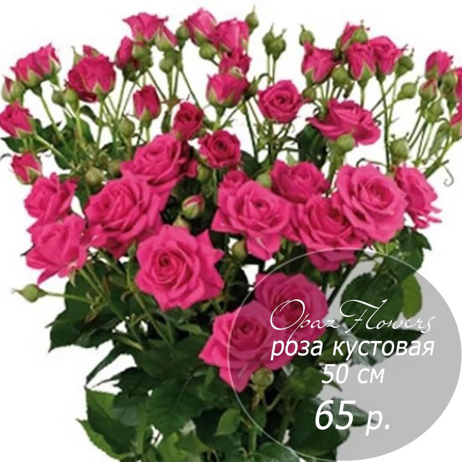 RK-27  кустовая роза 50 см