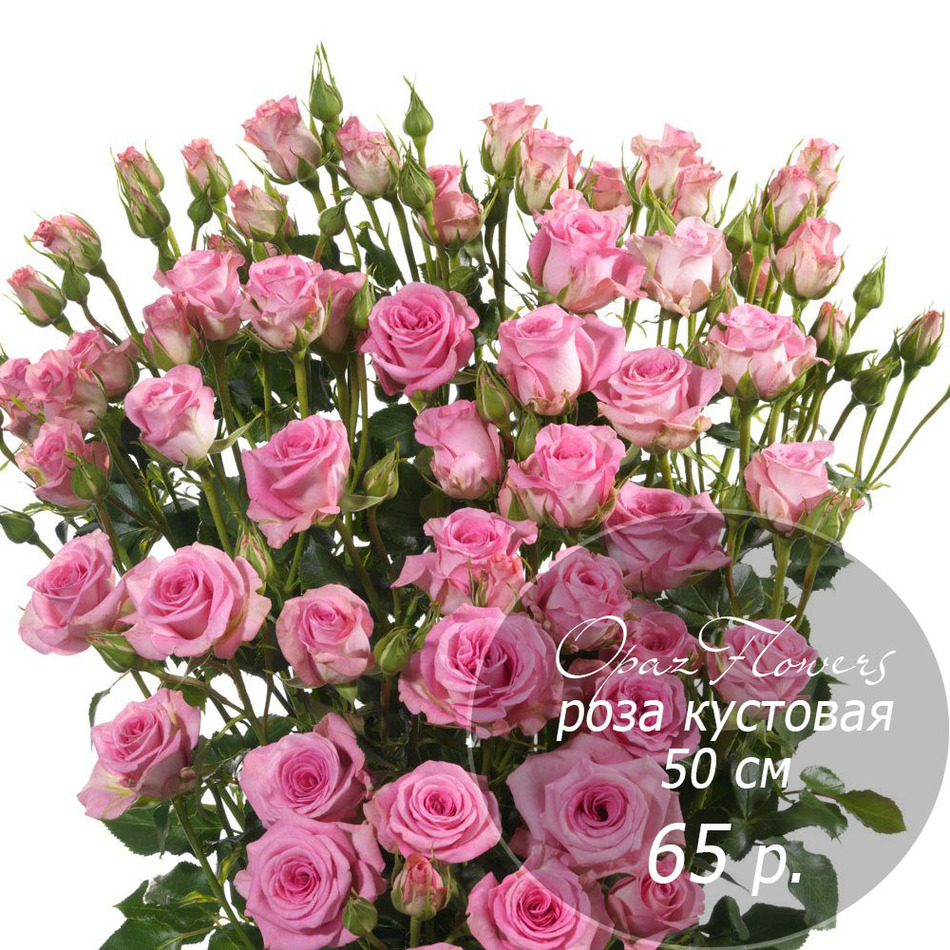 RK-26  кустовая роза 50 см