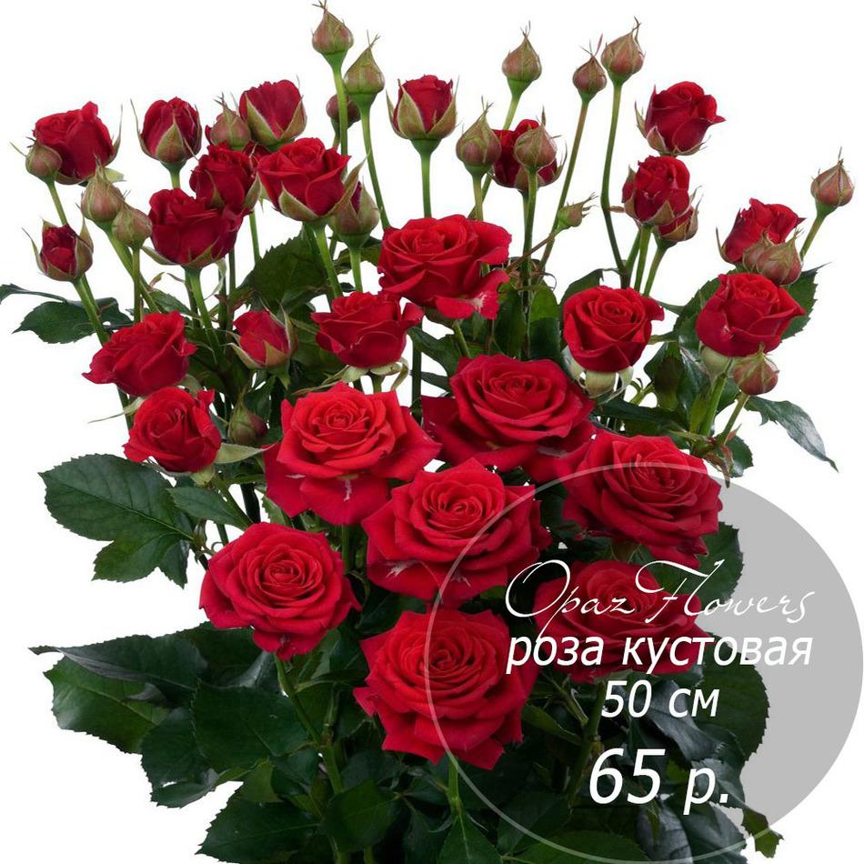 RK-30 кустовая роза 50 см