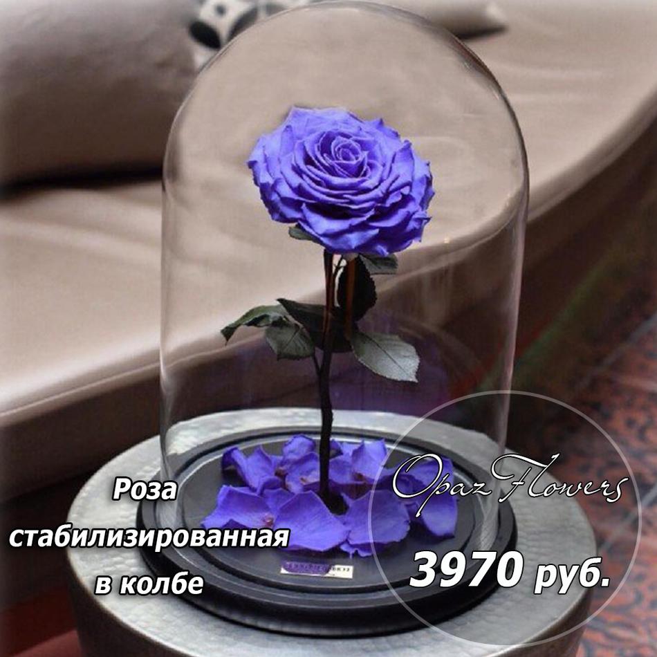 стабилизированная сиреневая роза