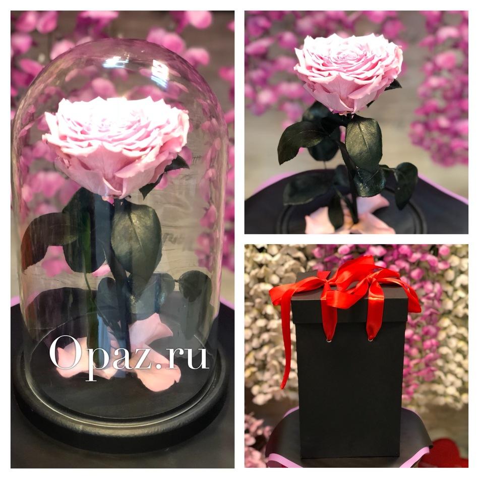 Стабилизированная  розовая роза