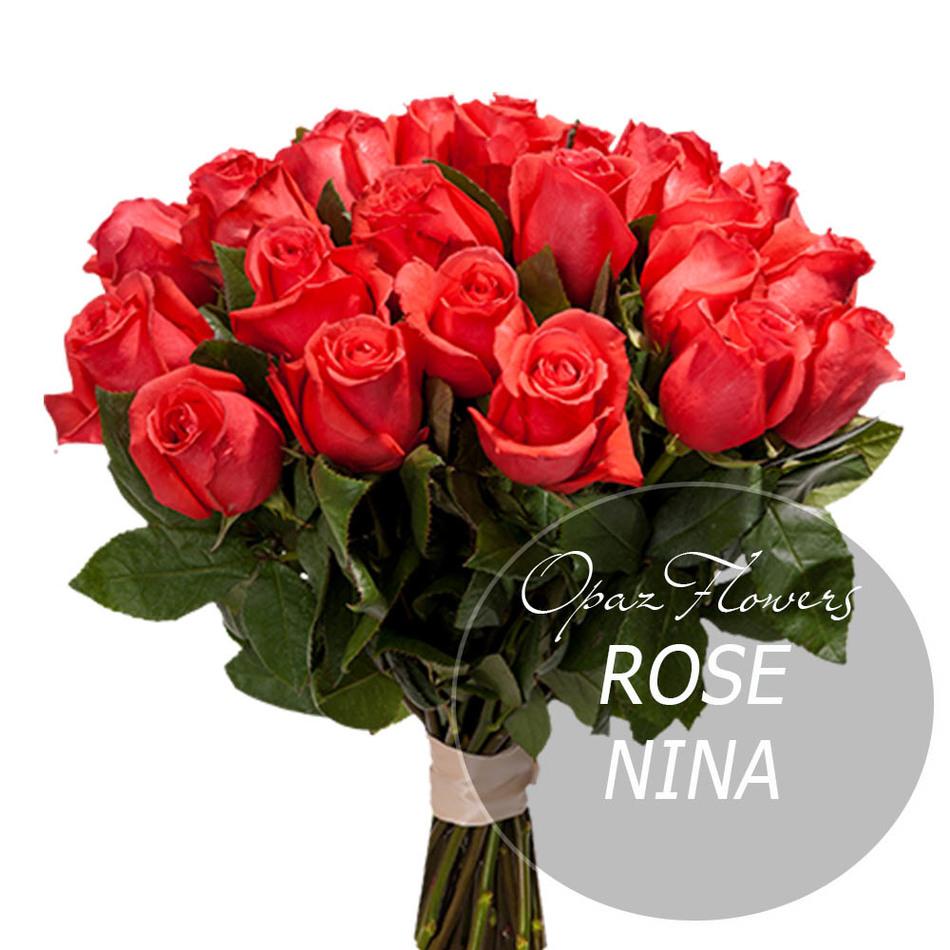 Роза Нина NRS-1405