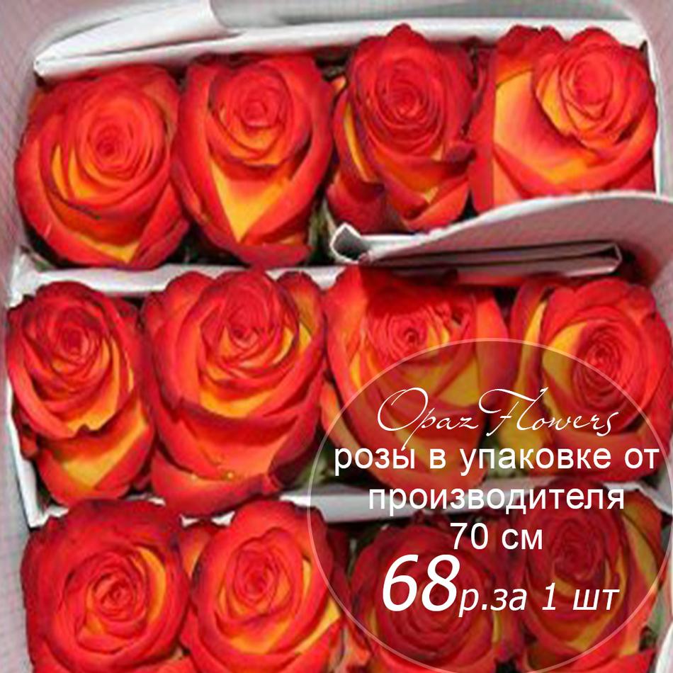 Розы в пачке от производителя   высота 70 см  ар.RO-015