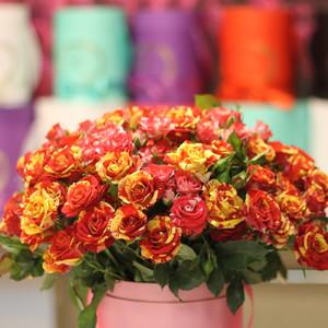 кустовые розы  двухцветные IMG_3072.JPG
