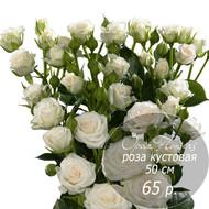 RK-28  кустовая роза 50 см