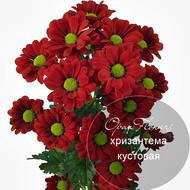 № A-1711  Хризантема кустовая.