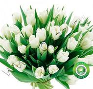 № Т-1808 37 тюльпанов Цена: 1850 руб.