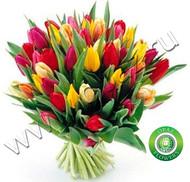 № Т-1809 51 тюльпан Цена: 2550 руб.