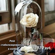 Стабилизированная роза белая