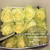 Розы в пачке от производителя   высота 80 см  ар.RO-024