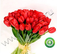 № Т-1802 41 тюльпан Цена: 2050 руб.