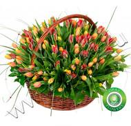 № Т-1823 151 тюльпан Цена: 8550 руб.