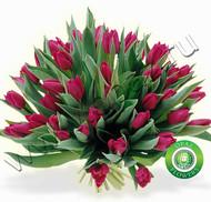 № Т-1811 55 тюльпанов Цена: 2750 руб.