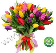 № Т-1807 31 тюльпан Цена: 1550 руб.