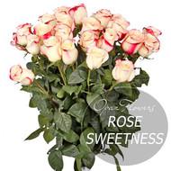№ RS-1400на фото 25 роз кремово-красного цвета