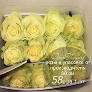 Розы в пачке от производителя   высота 60 см  ар.RO-010
