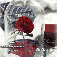 Роза  стабилизированная красная