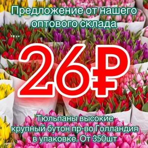 Тюльпаны от 350шт