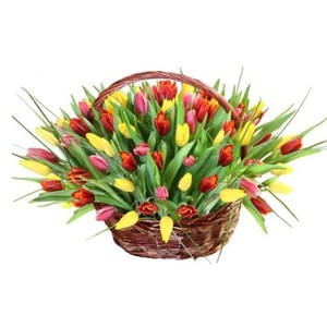 Тюльпаны 101шт №ТУ47