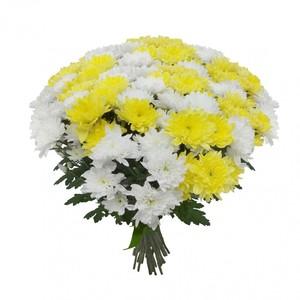 Букет 21 хризантема № Х-041
