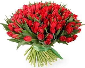 Букет красных тюльпанов 101 шт. в оформлении лента