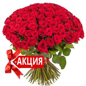 Большой букет  красных роз -101 красная роза 70 см