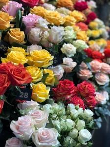 Роза Эквадор микс 50 см. заказ от 25 шт.