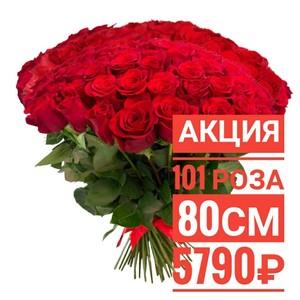 101 красная роза 80 см крупный бутон. По Вашему желанию цвет может быть изменён.