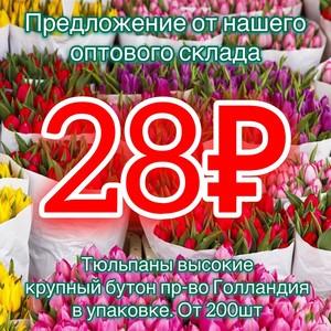 Тюльпаны от 200шт