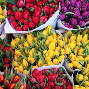 Тюльпаны от 1000шт