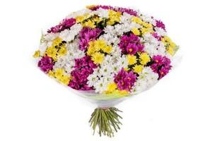Н-032 Букет 75 куст хризантем в оформлении