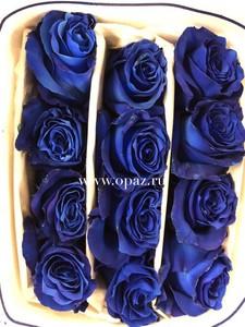 Роза синяя 70 см в упаковке от производителя