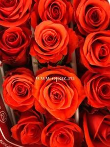 """Роза """"Нина"""" 50см цена за шт. 63руб. в упак 25шт. от производителя"""
