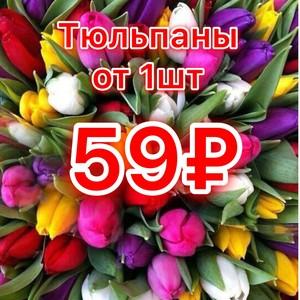 Тюльпаны от 1шт. 59р