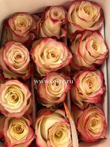 """Роза """"Свитнесс"""" 50 см в упаковке от производите"""