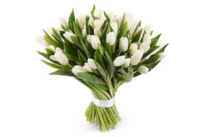 Букет белых тюльпанов 37 шт в оформлении лента
