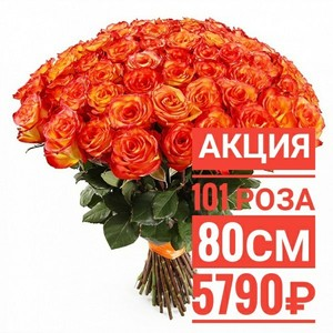 """101 роза """"Хай Меджик"""" 80 см крупный бутон. По Вашему желанию цвет может быть изменён."""